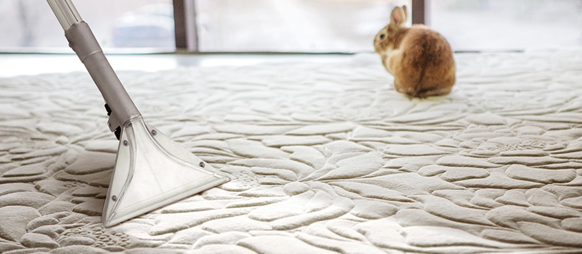Хімчистка ковроліну на дому фото