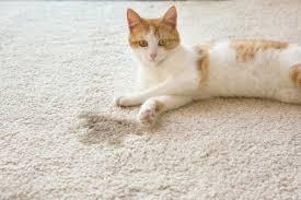 Как убрать запах кошачьей мочи с ковра